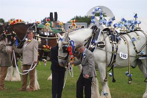 Cheshire Show Horses